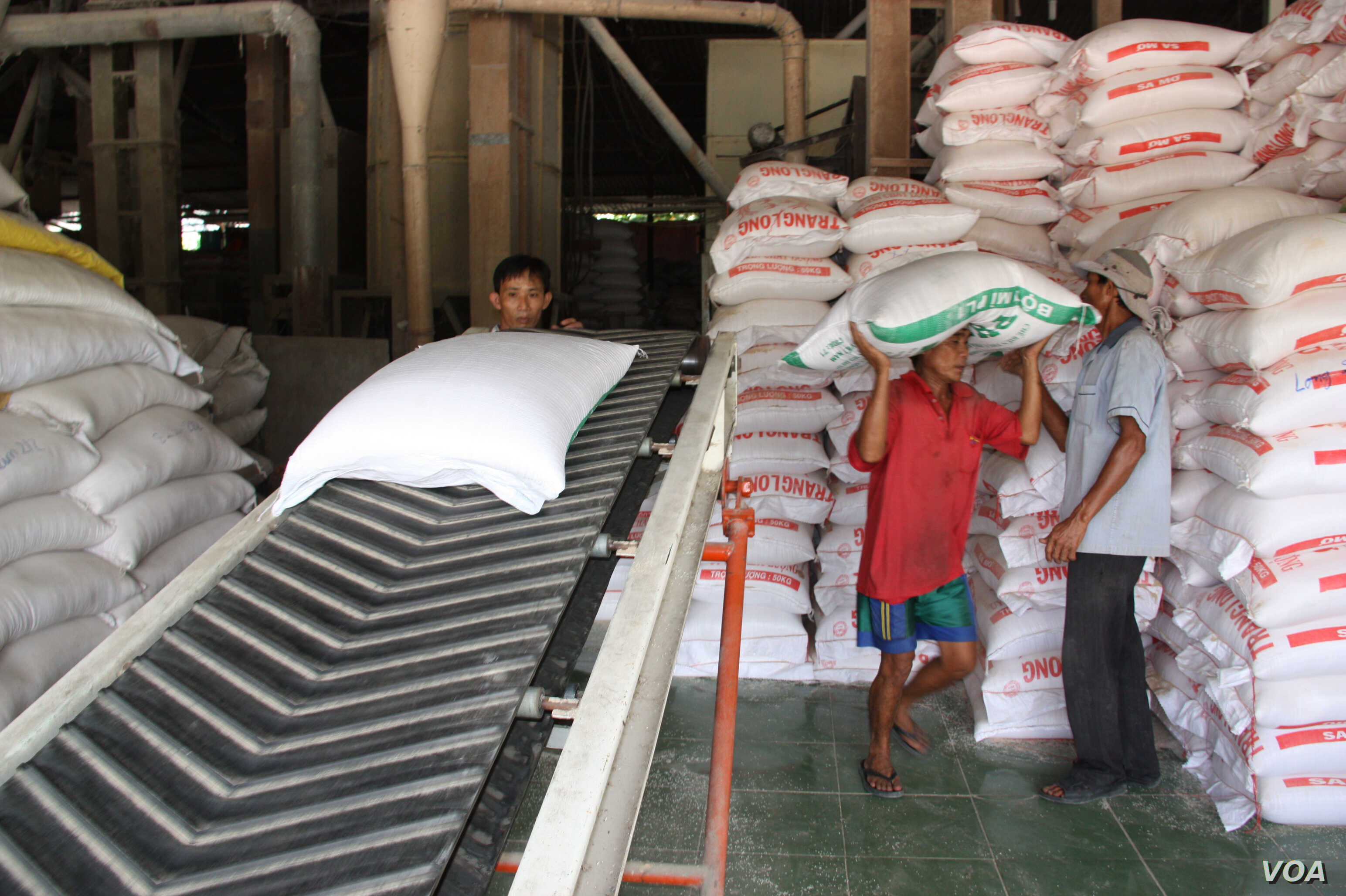 Workers carry bags of rice off a conveyor belt to stak in trucks, Tien Giang, Vietnam, September 14, 2012. (D. Schearf/VOA)