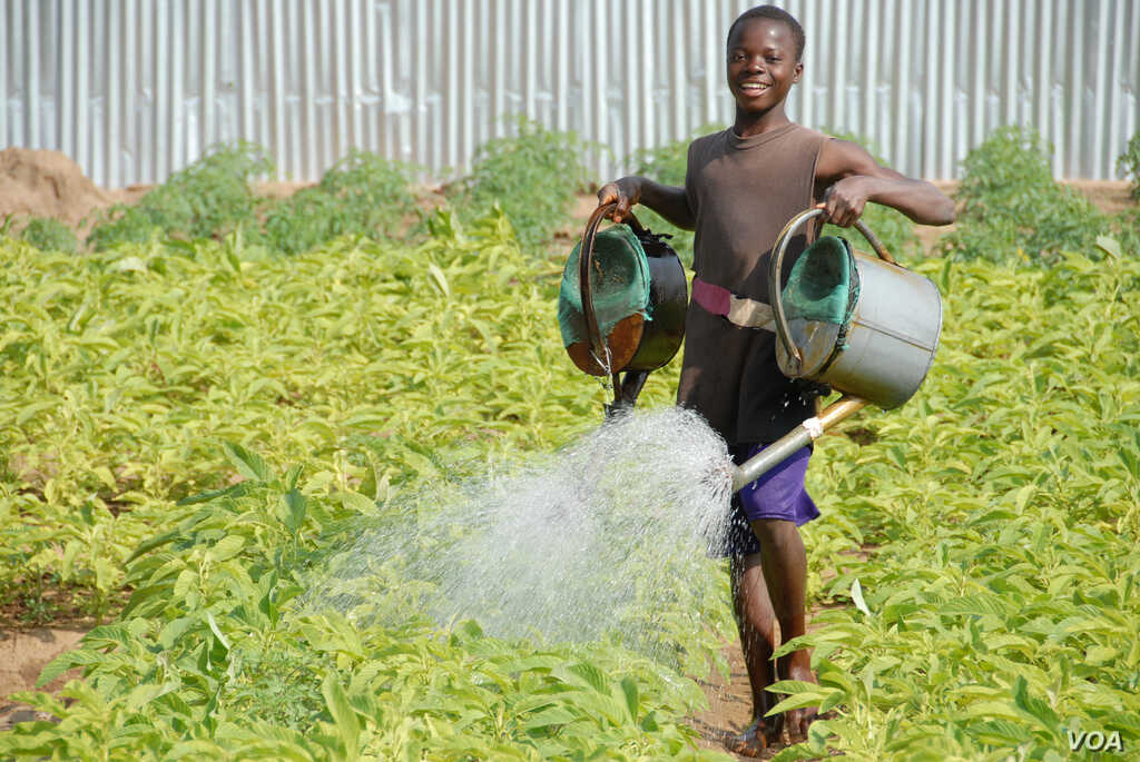 A boy in Benin waters food crops that are growing on land where agriculture previously failed. The water is pumped by means of solar power. (SELF)