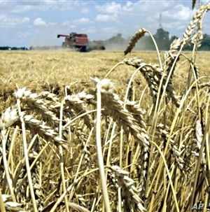Experts say previous cuts in research and development funding have resulted in a decline in growth of US crop yields since 1990.