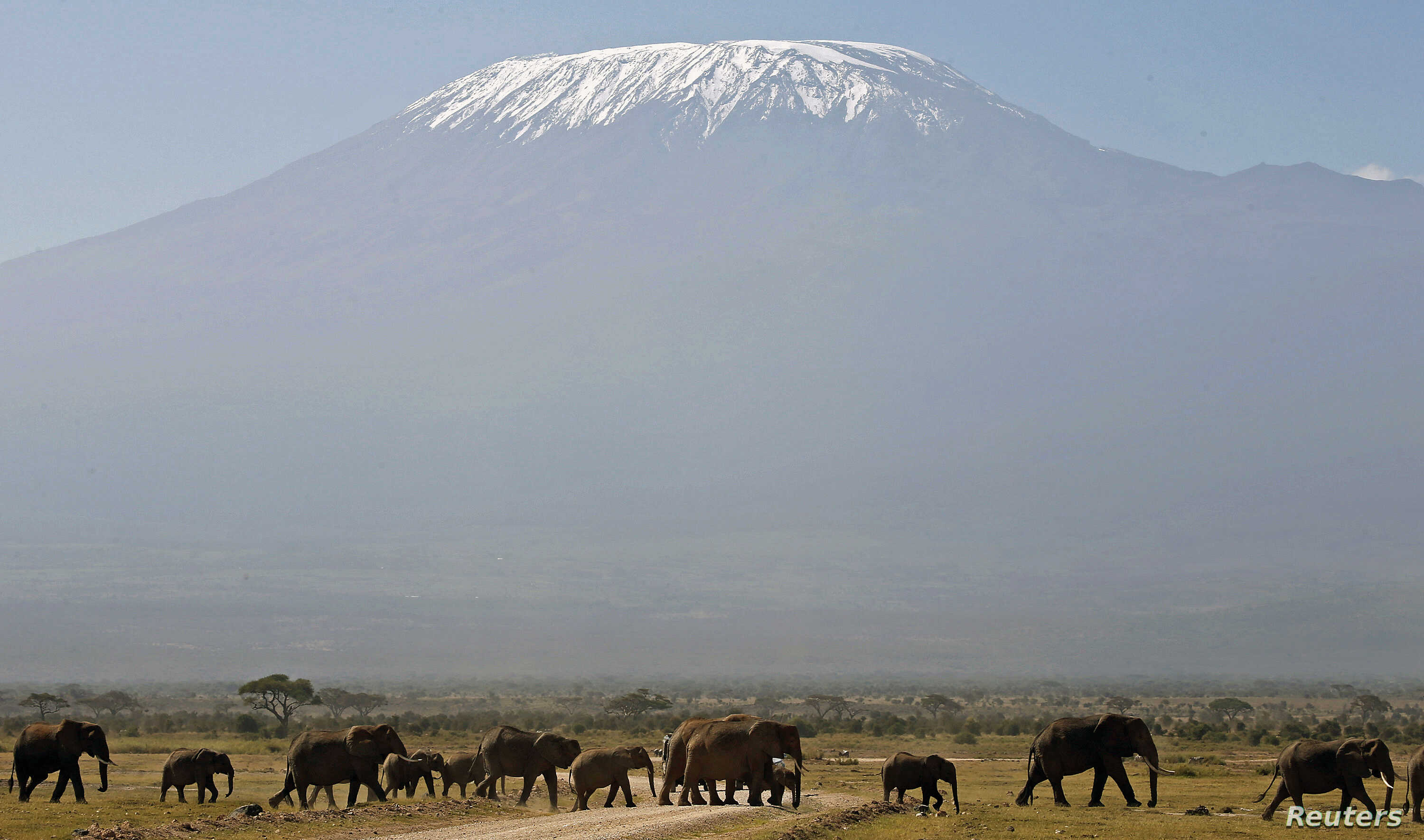 FILE - With Mount Kilimanjaro in the distance, elephants walk in Amboseli National Park, Tanzania, Jan. 2015.
