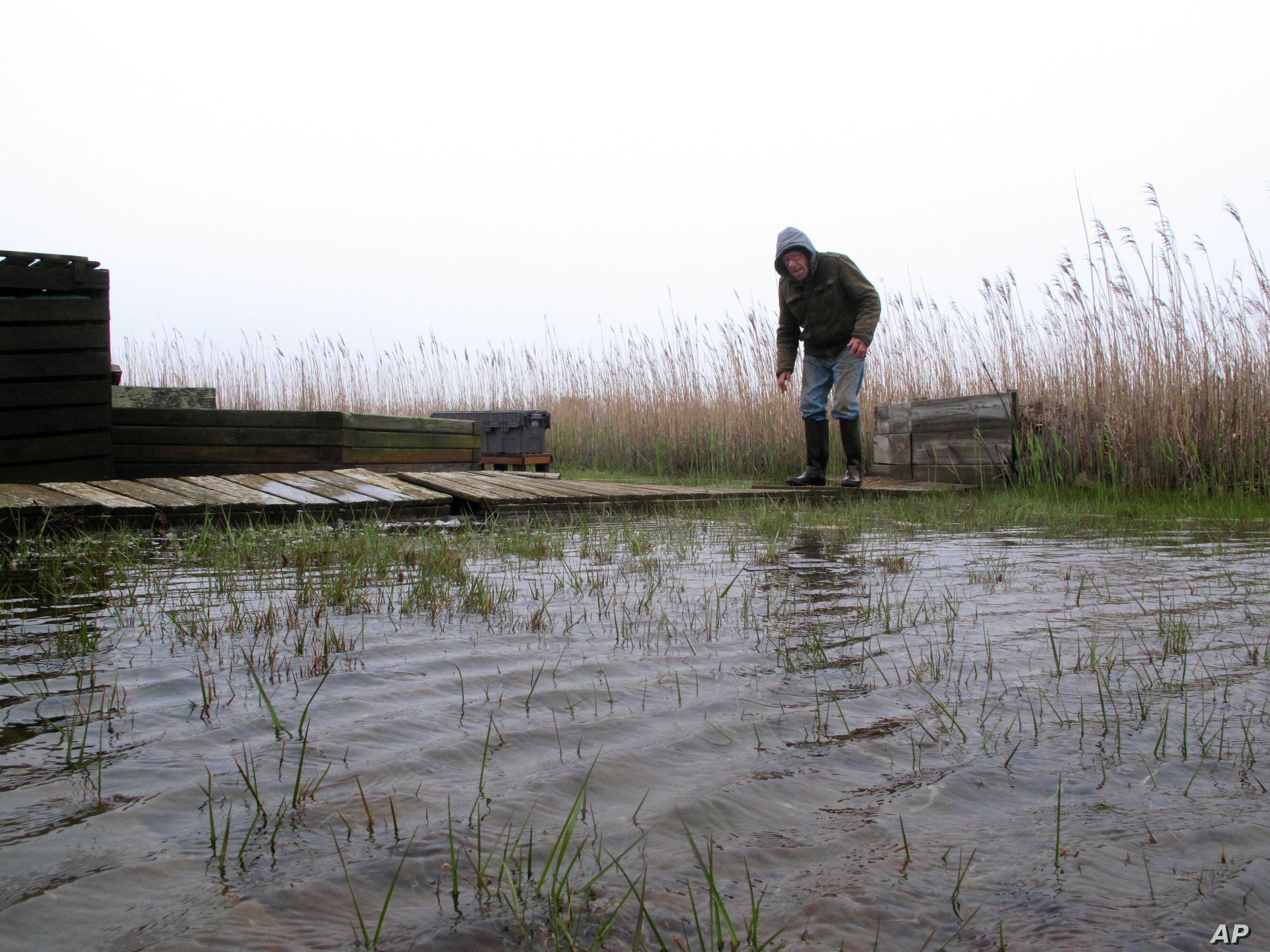 FILE - Jim O'Neill walks across a makeshift boardwalk he built in his back yard in Manahawkin N.J., because the property is almost always under water, even on sunny days, April 26, 2017.