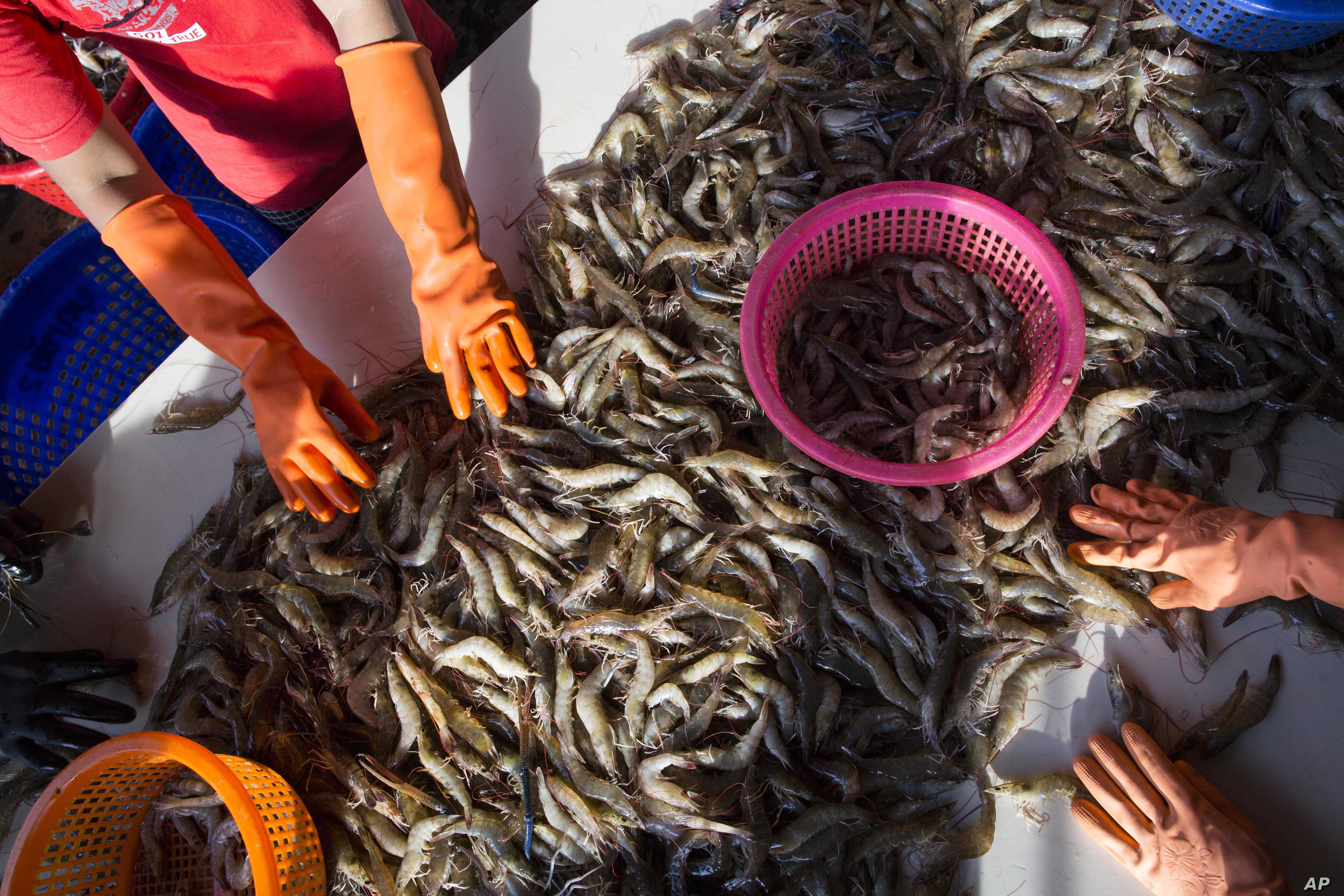 Cambodian Trafficking Victims Sue US Seafood Importers | Voice of