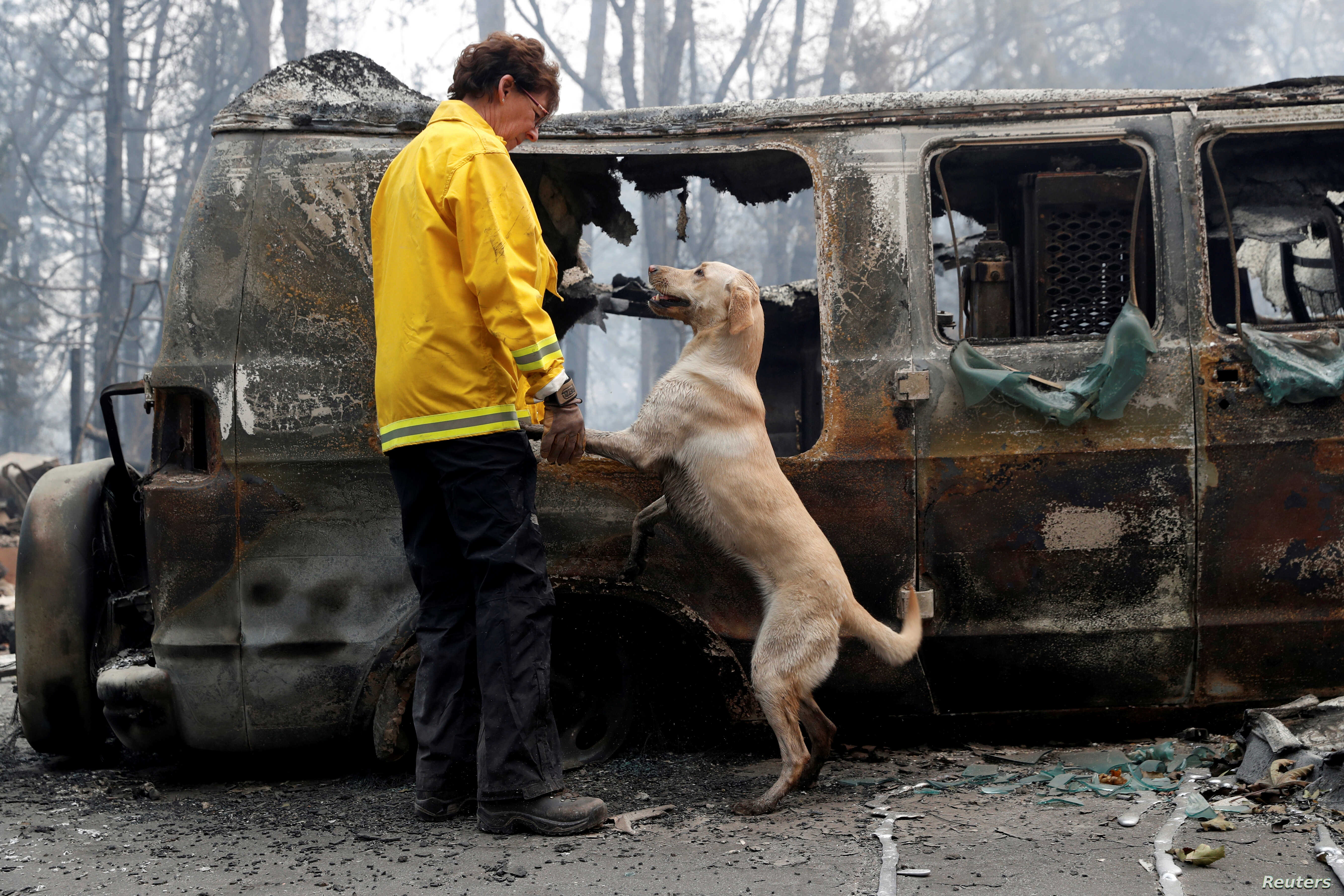 Karen Atkinson, of Marin, searches for human remains with her cadaver dog, Echo, in a van destroyed by the Camp Fire in Paradise, Calif., Nov. 14, 2018.