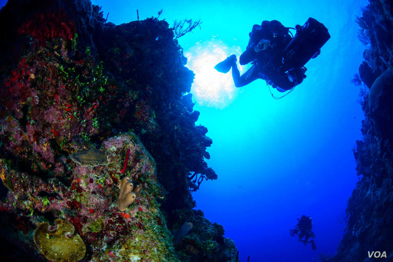 """Bart Shepherd dives into the """"twilight zone,"""" deep, dimly lit reefs 60-150 meters beneath the surface. He and Luiz Rocha are some of the only scientists trained to explore at these depths."""