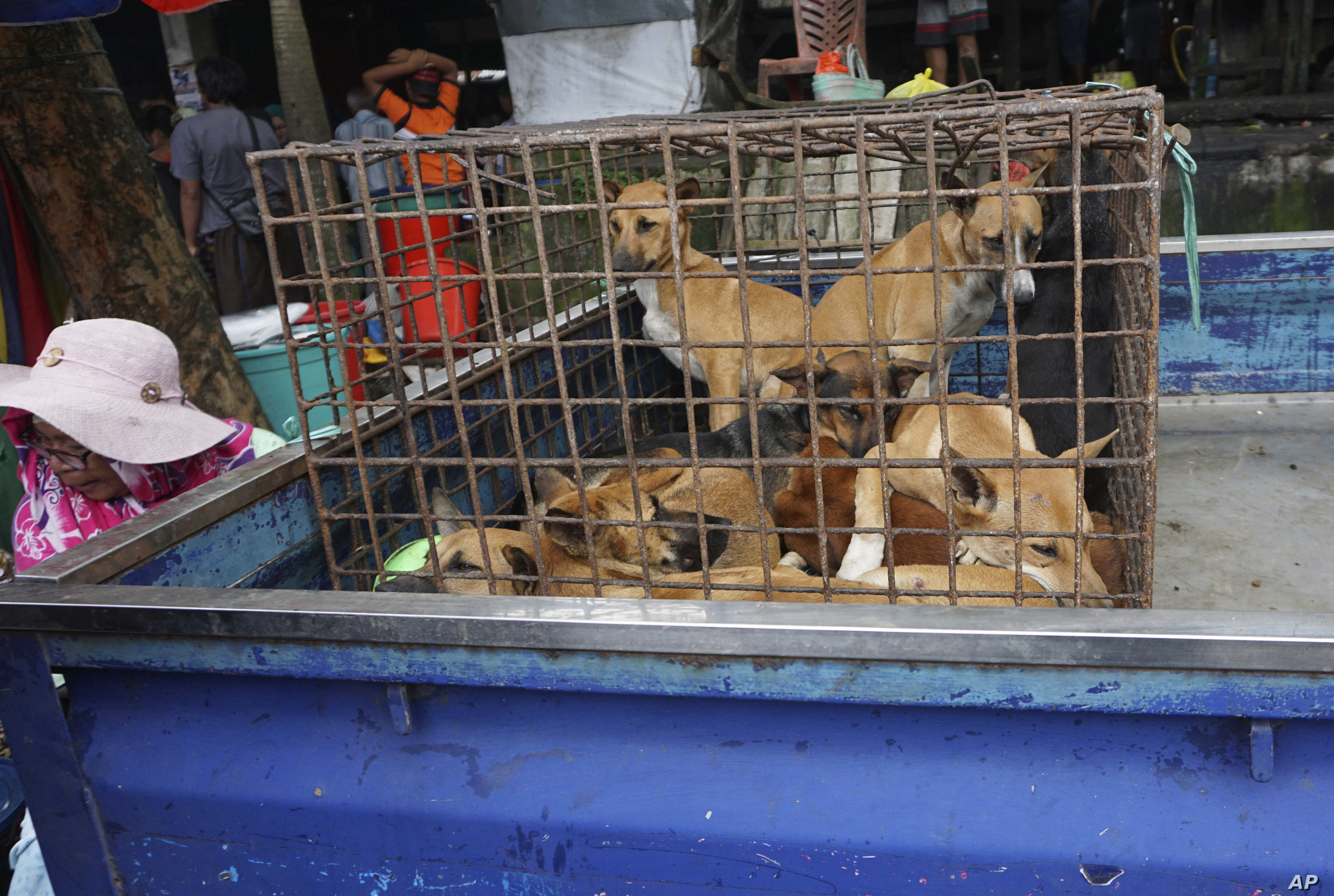 Stars Urge Indonesia to Ban 'Brutal' Trade in Dog, Cat Meat | Voice