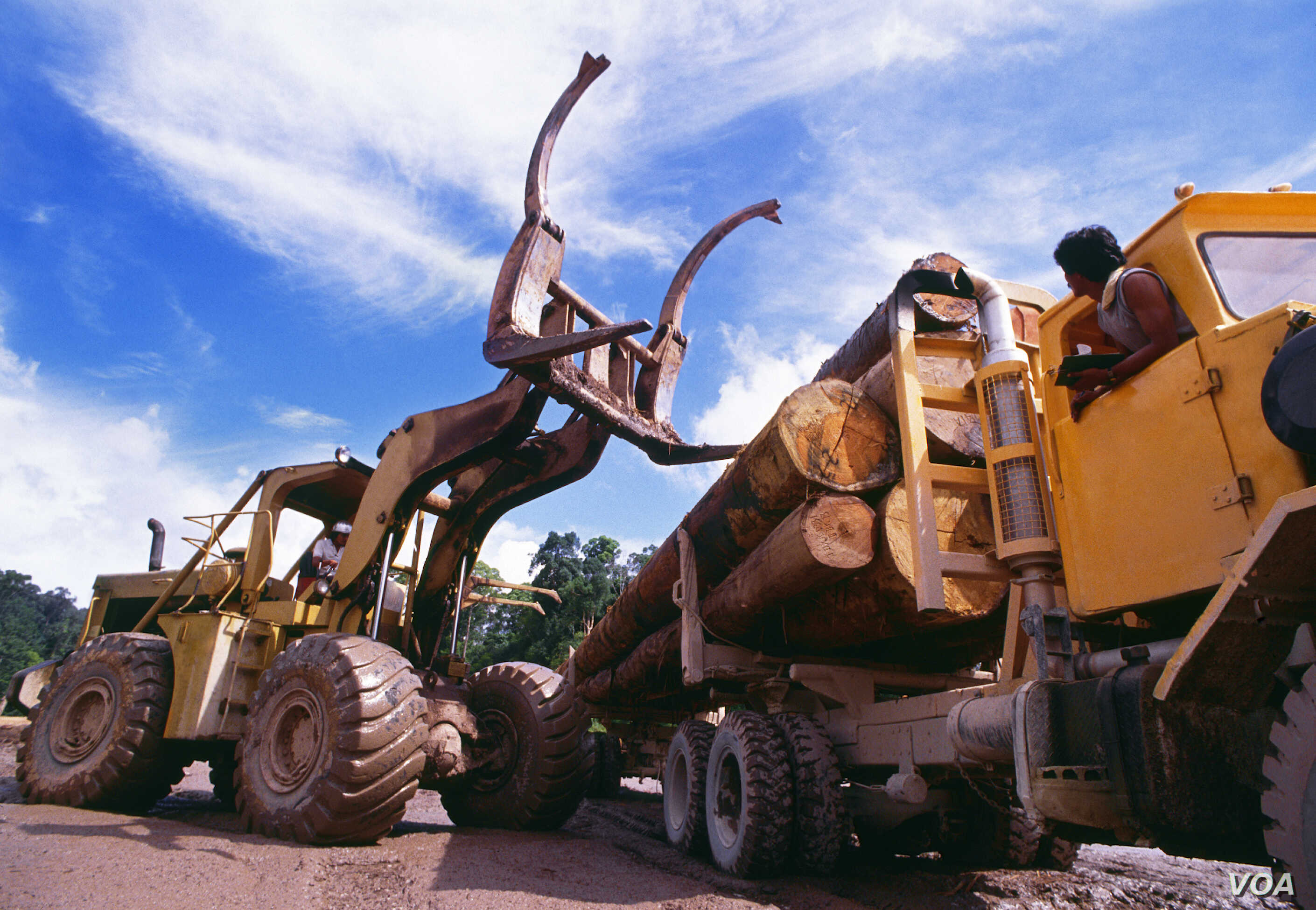 Organized crime is estimated to be involved in nearly 30% of global logging production. (UNEP)