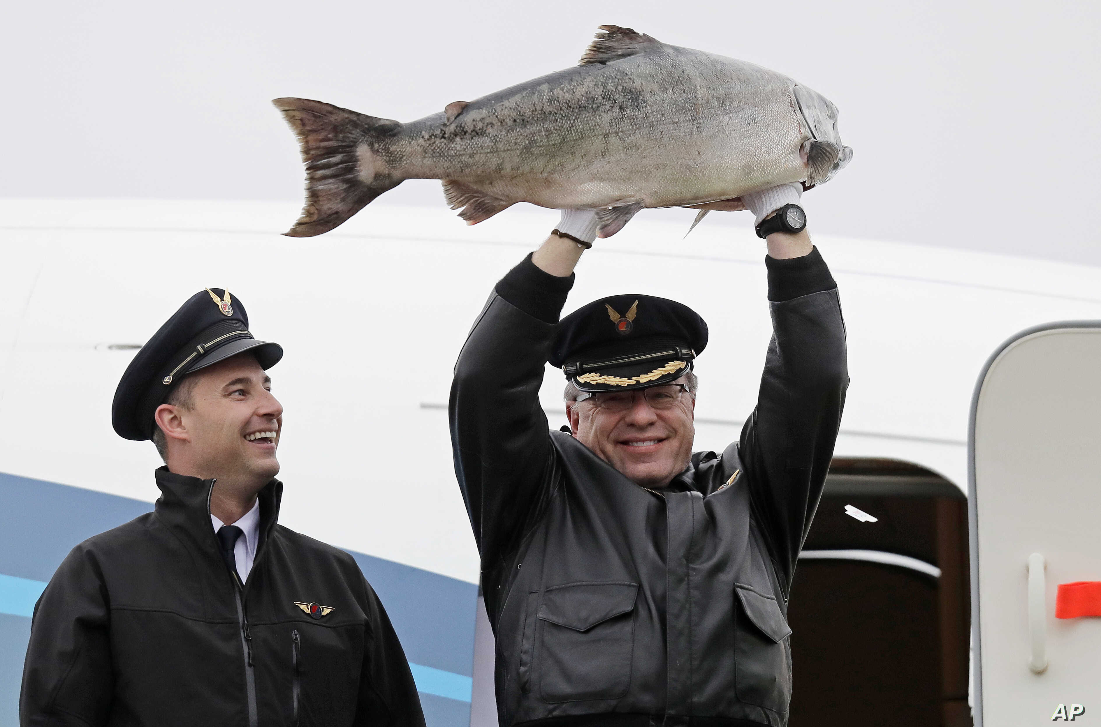 Captain Michael Adams holds up a large Copper River king salmon as he stands with first officer Bob Hood in the doorway an Alaska Airlines 737 airplane, May 18, 2018, at Seattle-Tacoma International Airport in Seattle. The plane was carrying thousand...