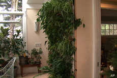 This living wall, covered with dozens of foliage plants, is watered four times a day by a hose hooked up to a pump.