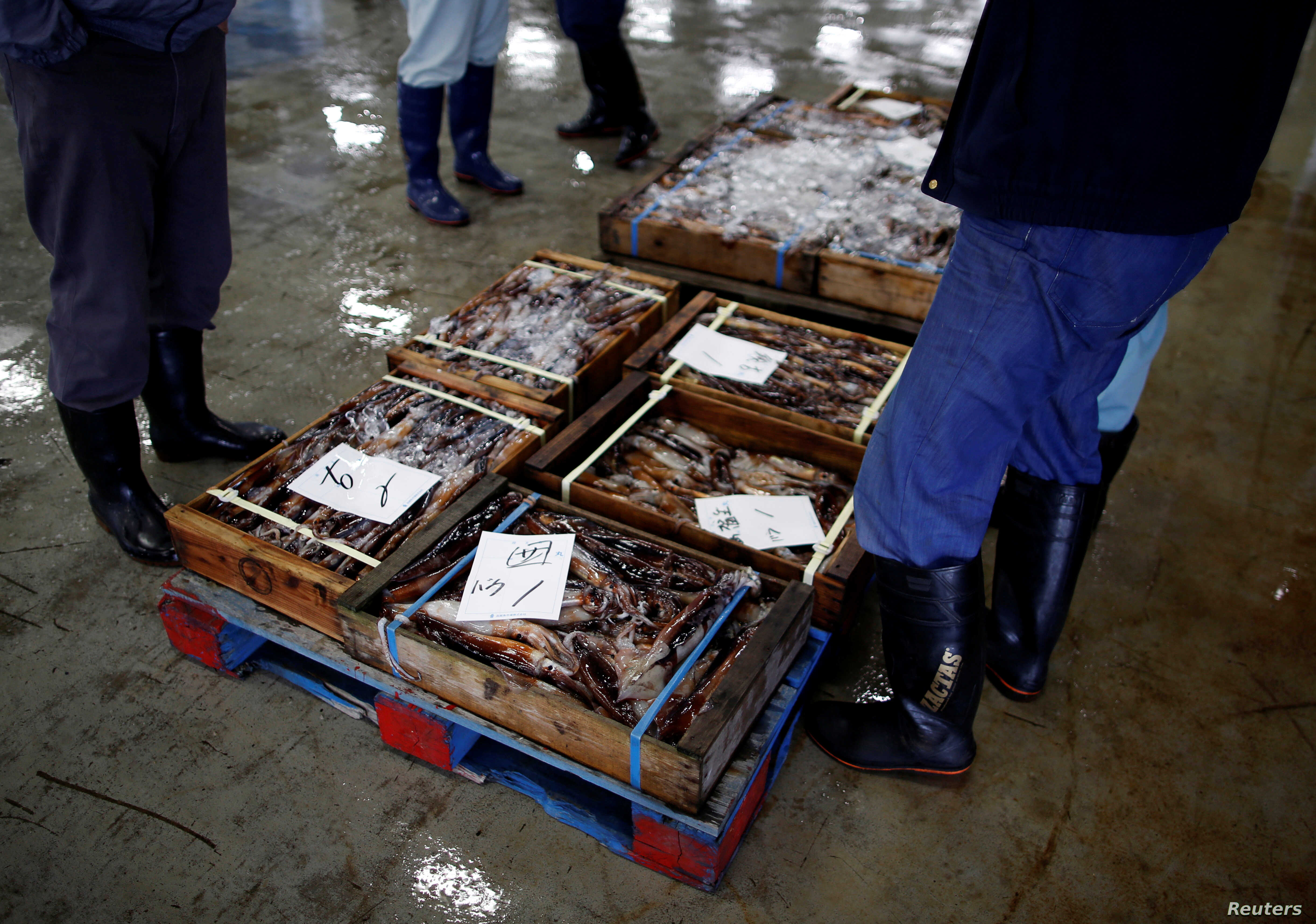 Local squid merchants inspect squid before an auction at Hakodate wholesale market in Hakodate, Hokkaido, Japan, July 20, 2018.
