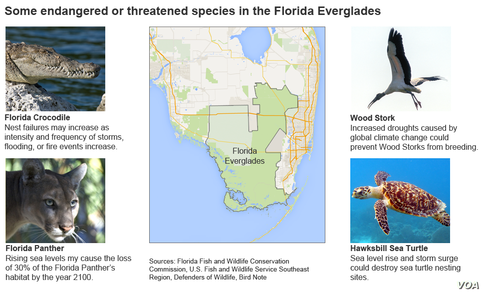 Some endangered or threatened species in the Florida Everglades