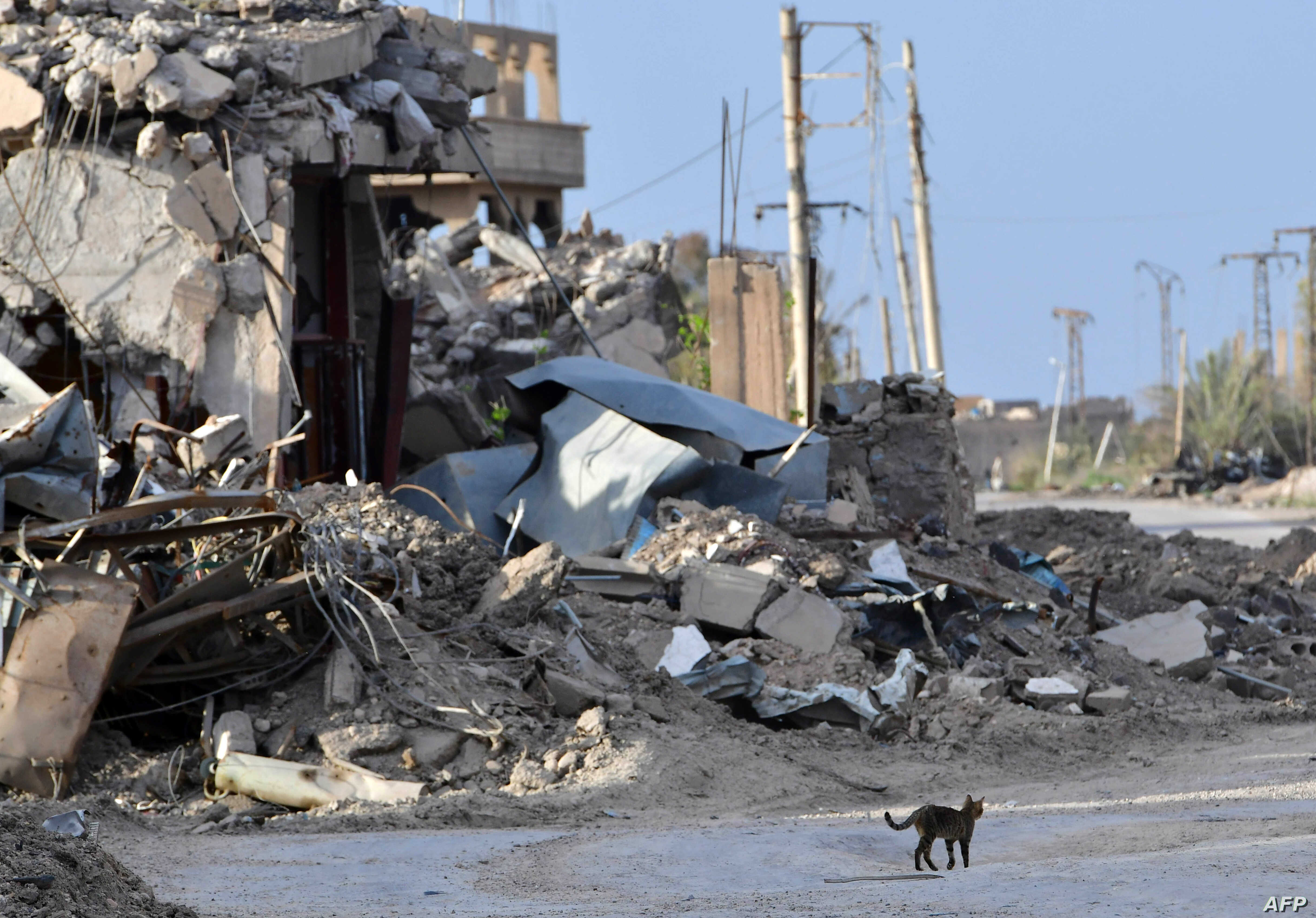 A cat walks past a destroyed building in the village of Sousa, near the village of Baghuz, in the eastern Syrian province of Deir Ezzor March 21, 2019.
