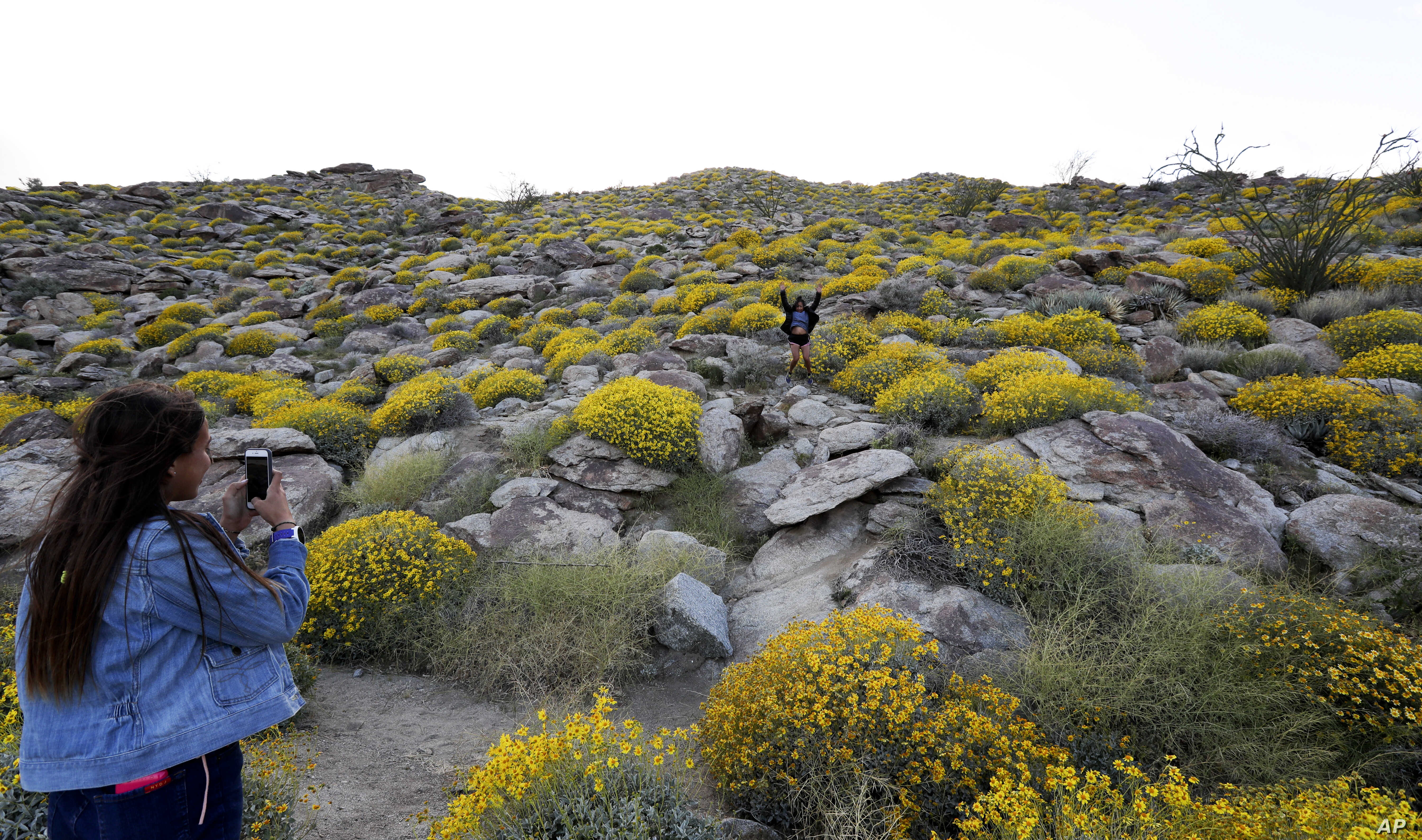 Camille Perkins (left) of Dana Point, Calif., takes a picture as her mother, Cynthia Perkins (center) also of Dana Point, jumps among blooming desert shrubs in Borrego Springs, Calif.