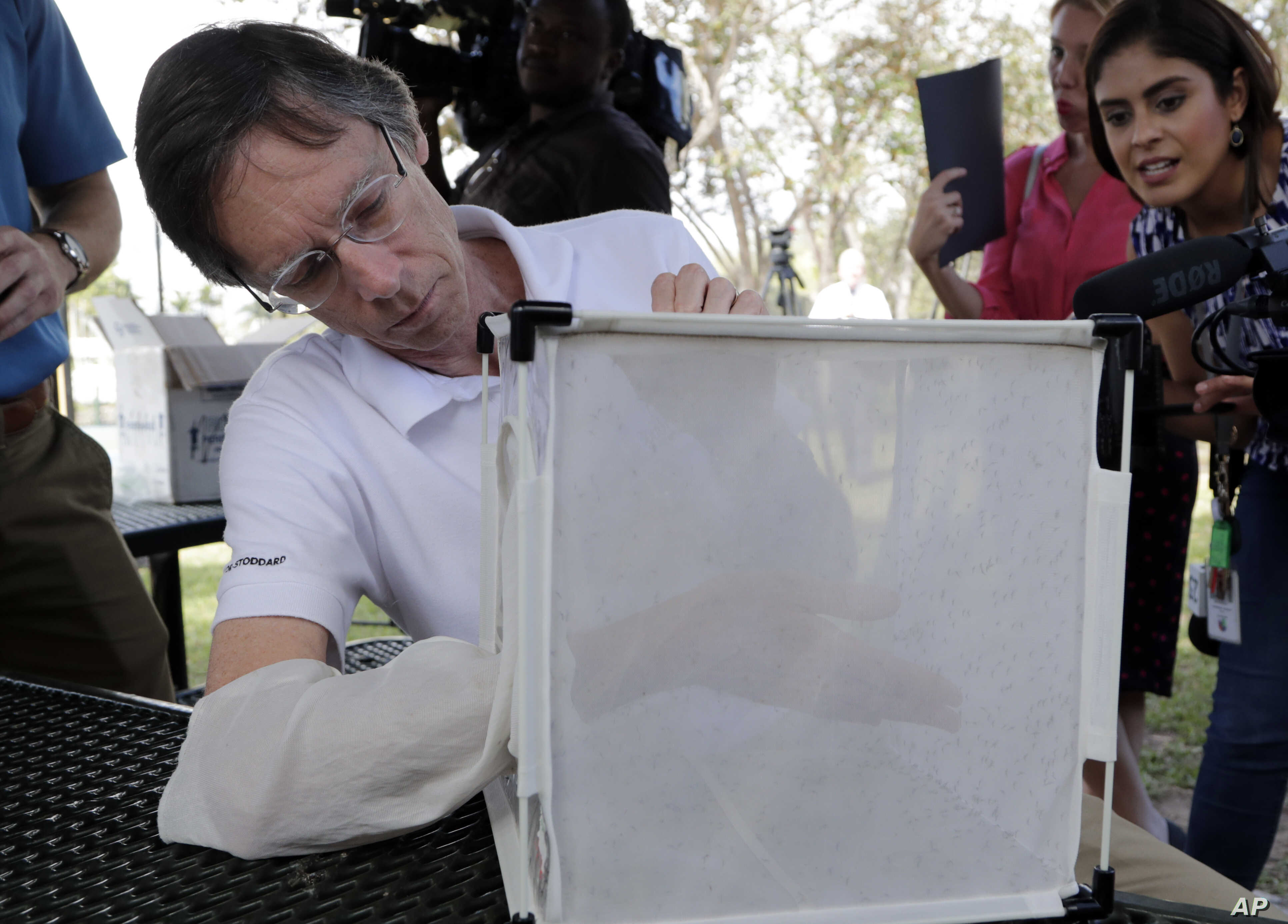 Bill Petrie, director of Miami-Dade County Mosquito Control, places his hand inside a box containing Wolbachia-infected male mosquitoes, in South Miami, Florida, Feb. 8, 2018.