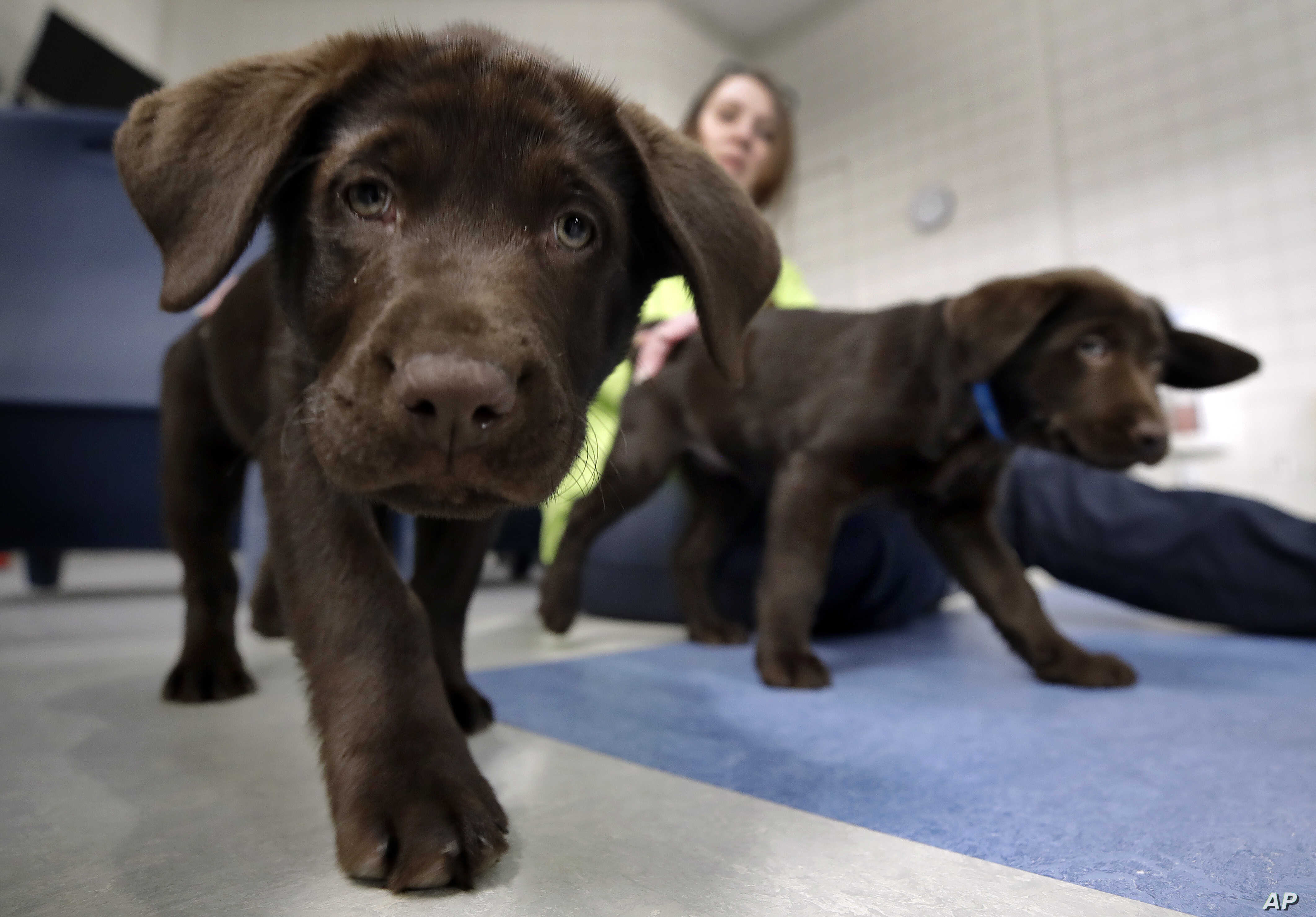 Inmates Battling Addiction Get Unlikely Ally: A Puppy