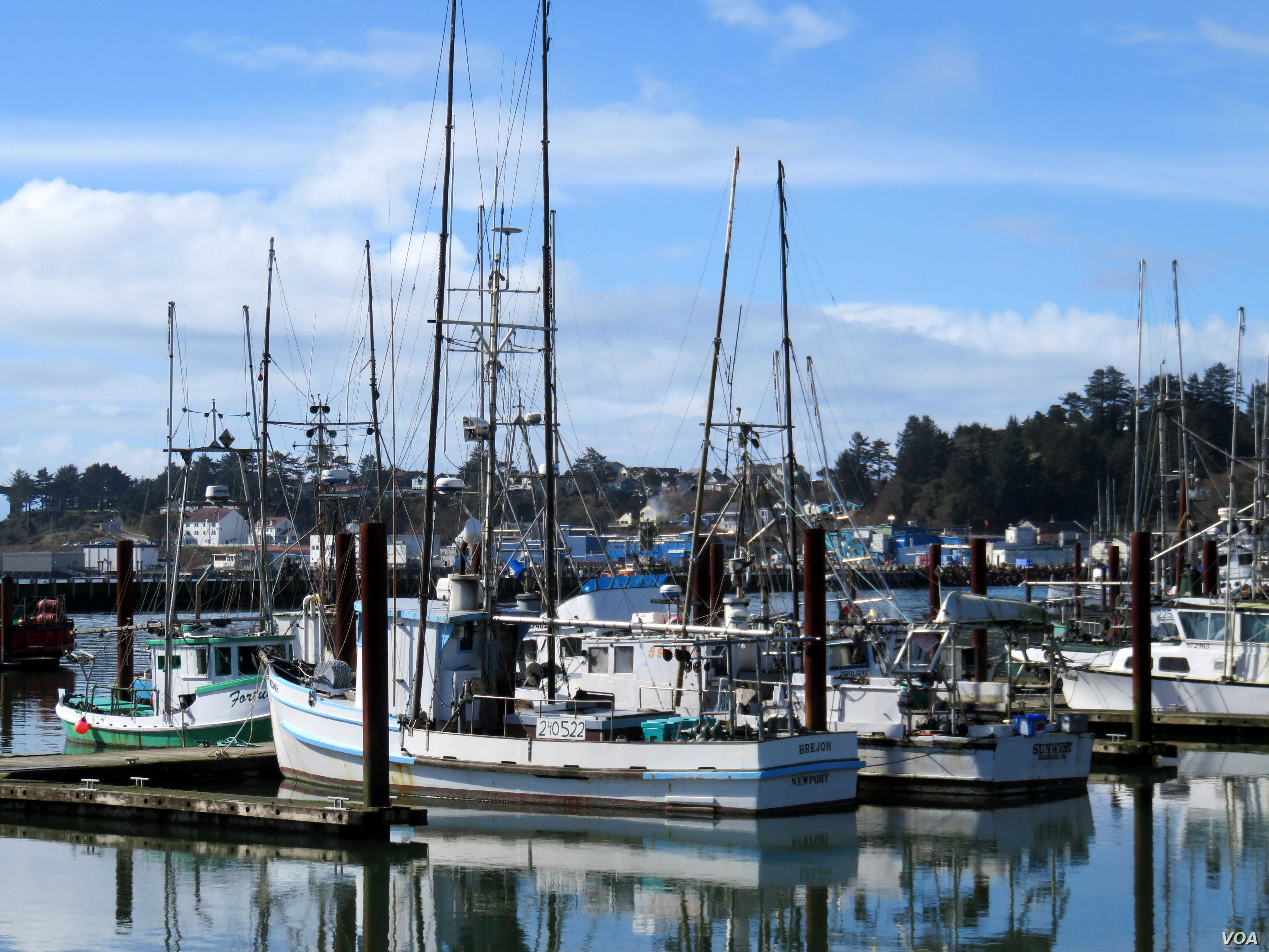 Fishing boats and trawlers berthed at docks in Newport, Oregon. The commercial fishing fleets in Oregon and Washington state remain overwhelming male-dominated.