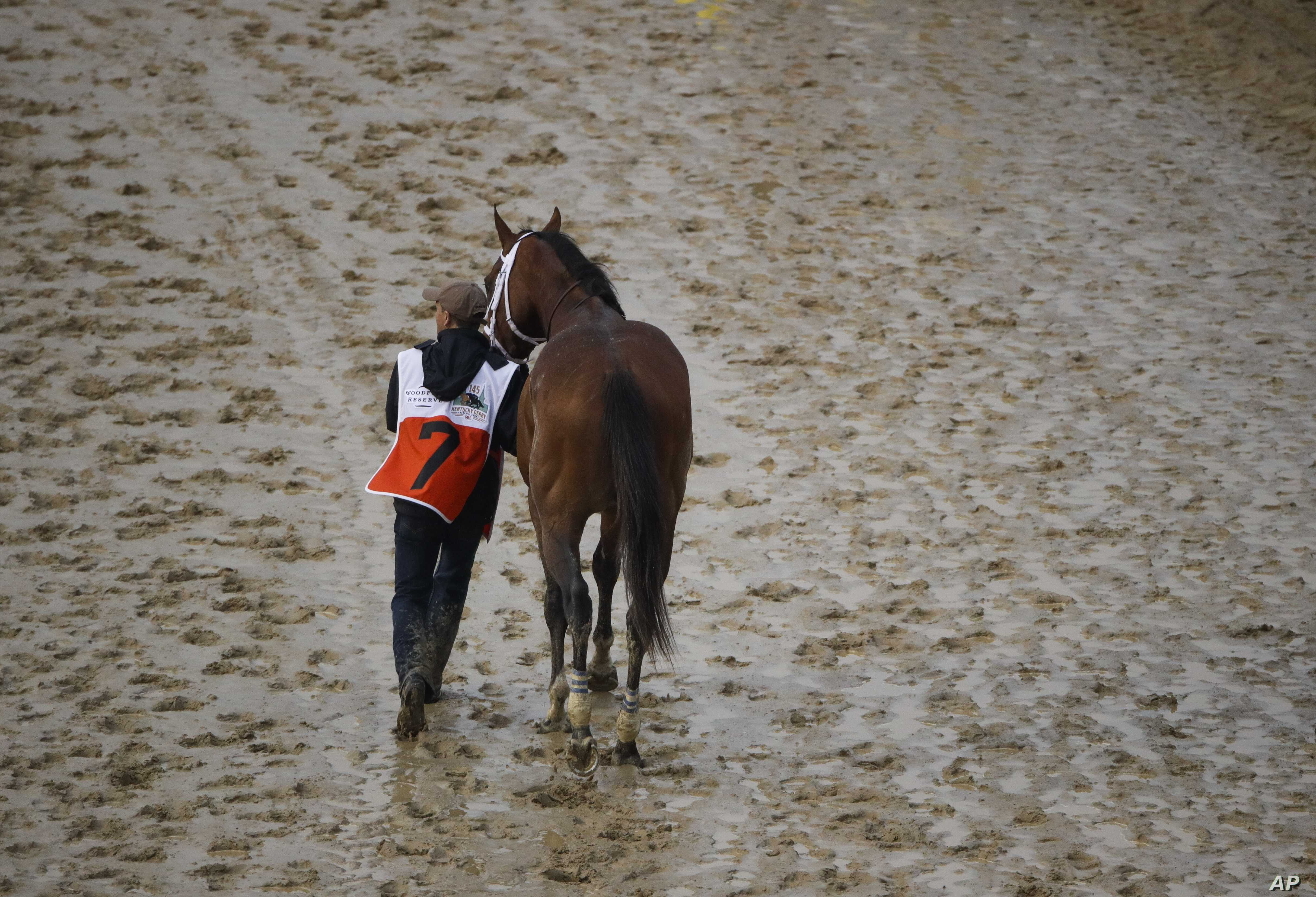 Maximum Security is walked off the track after being disqualified in the 145th running of the Kentucky Derby horse race at Churchill Downs, May 4, 2019, in Louisville, Ky.