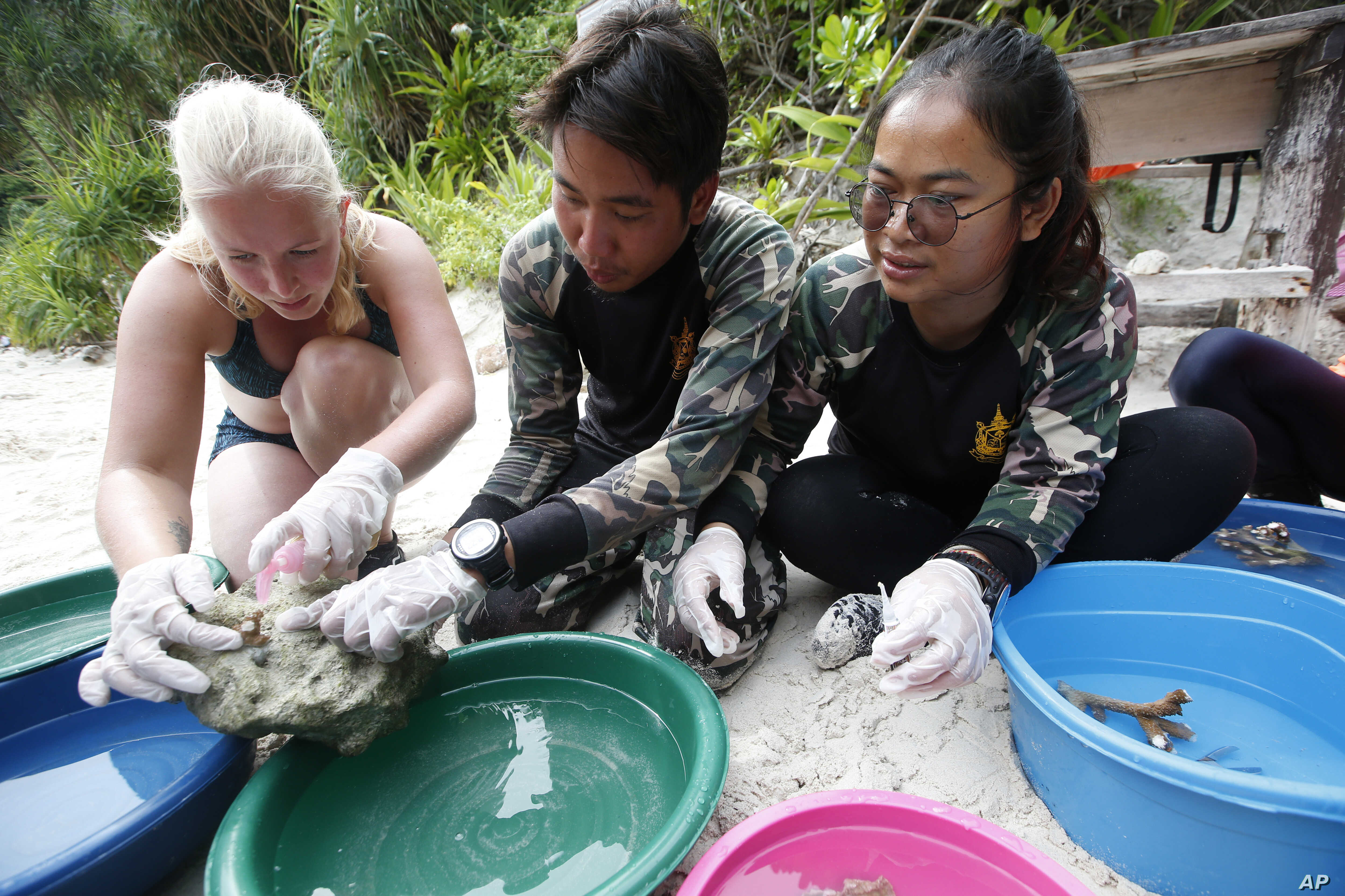 Jeanette van Leeuwin, a 29-year-old from The Netherlands, helps national park rangers with coral propagation on Maya Bay, Phi Phi Leh island in Krabi province, Thailand, May 31, 2018.