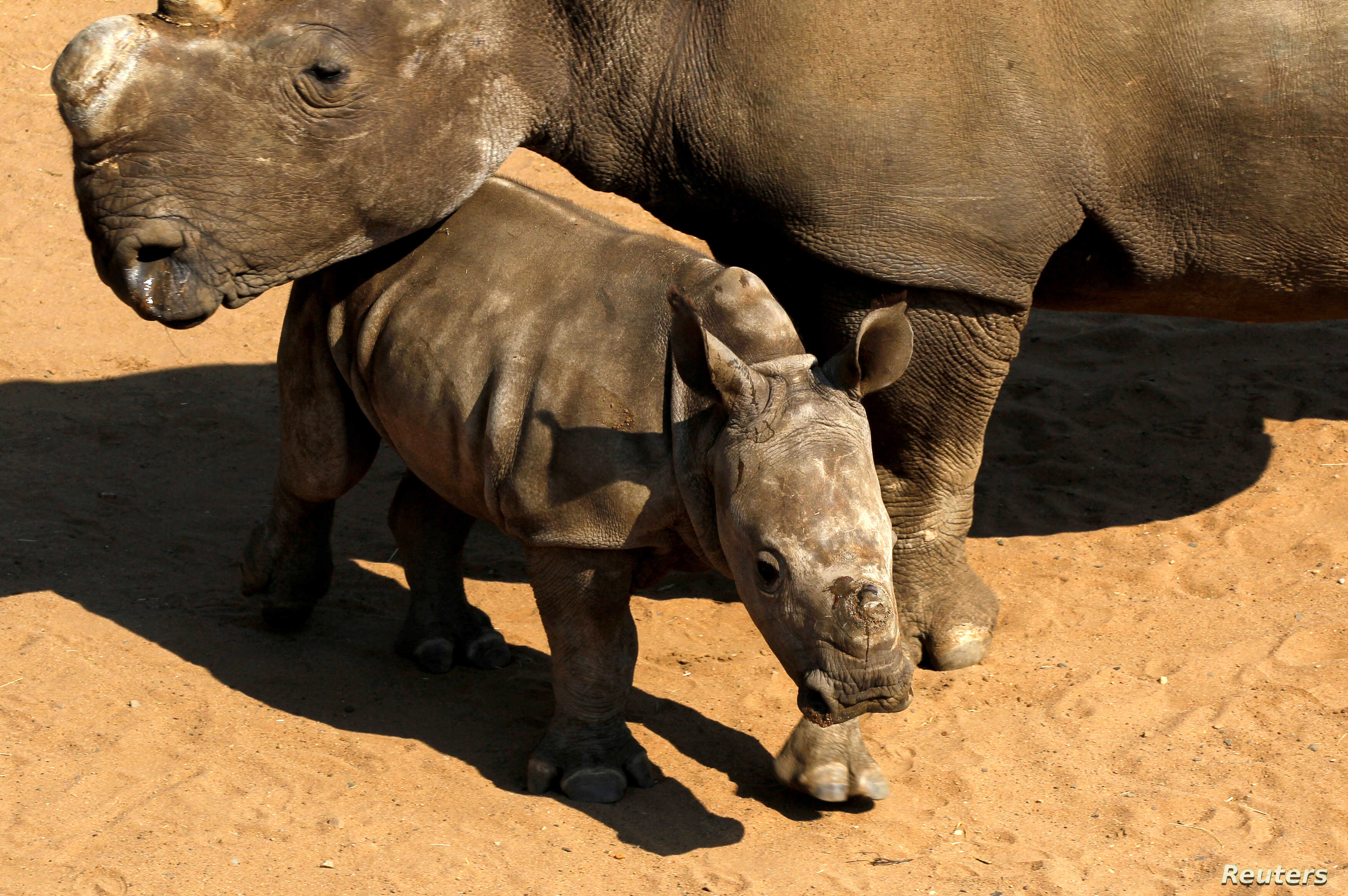 Namibia Considers Withdrawal from Wildlife Convention Unless