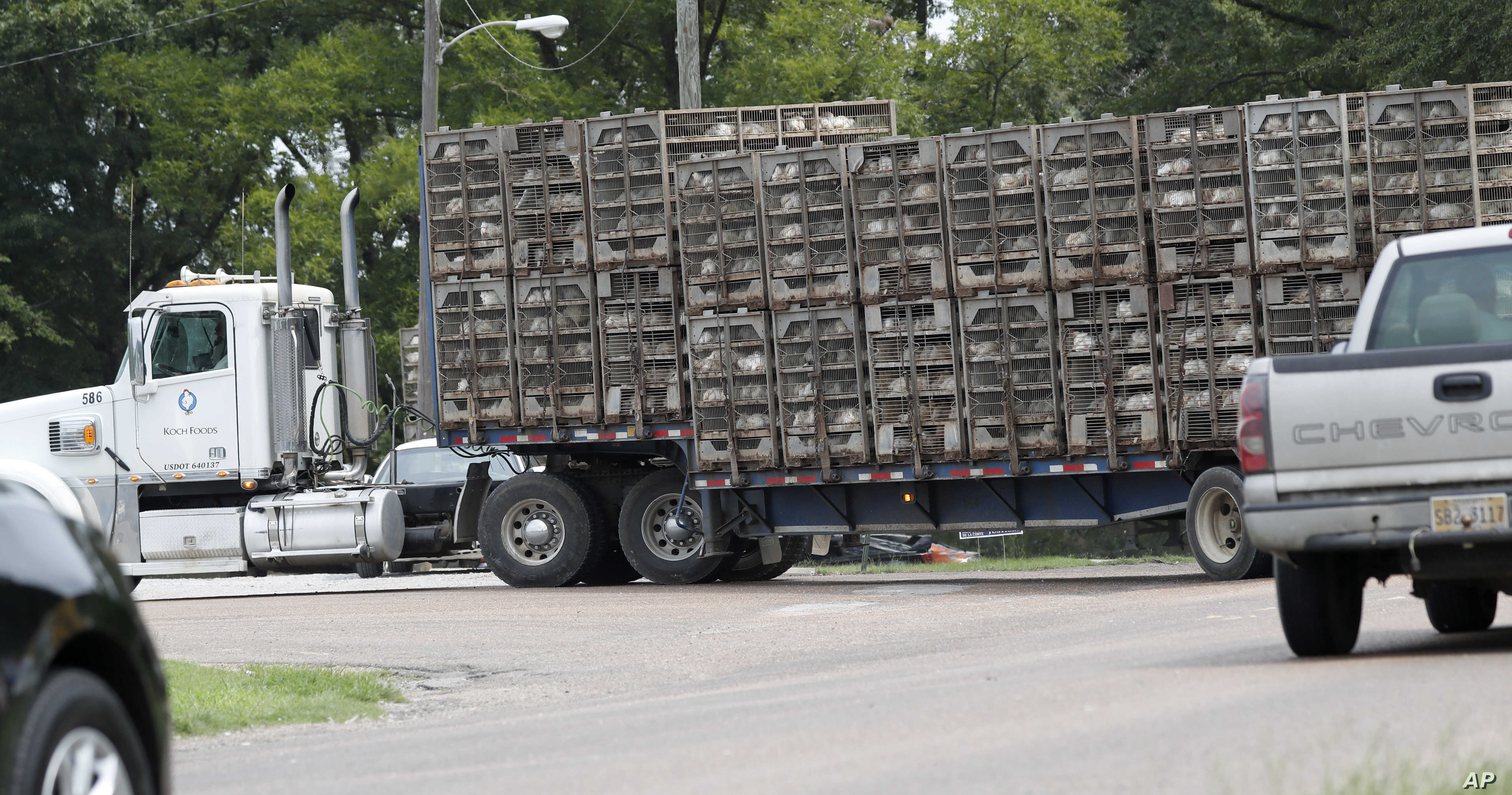 Business continues at this Koch Foods Inc., plant in Morton, Miss., Aug. 8, 2019, as chickens are shipped in for processing following Wednesday's raid by U.S. immigration officials.