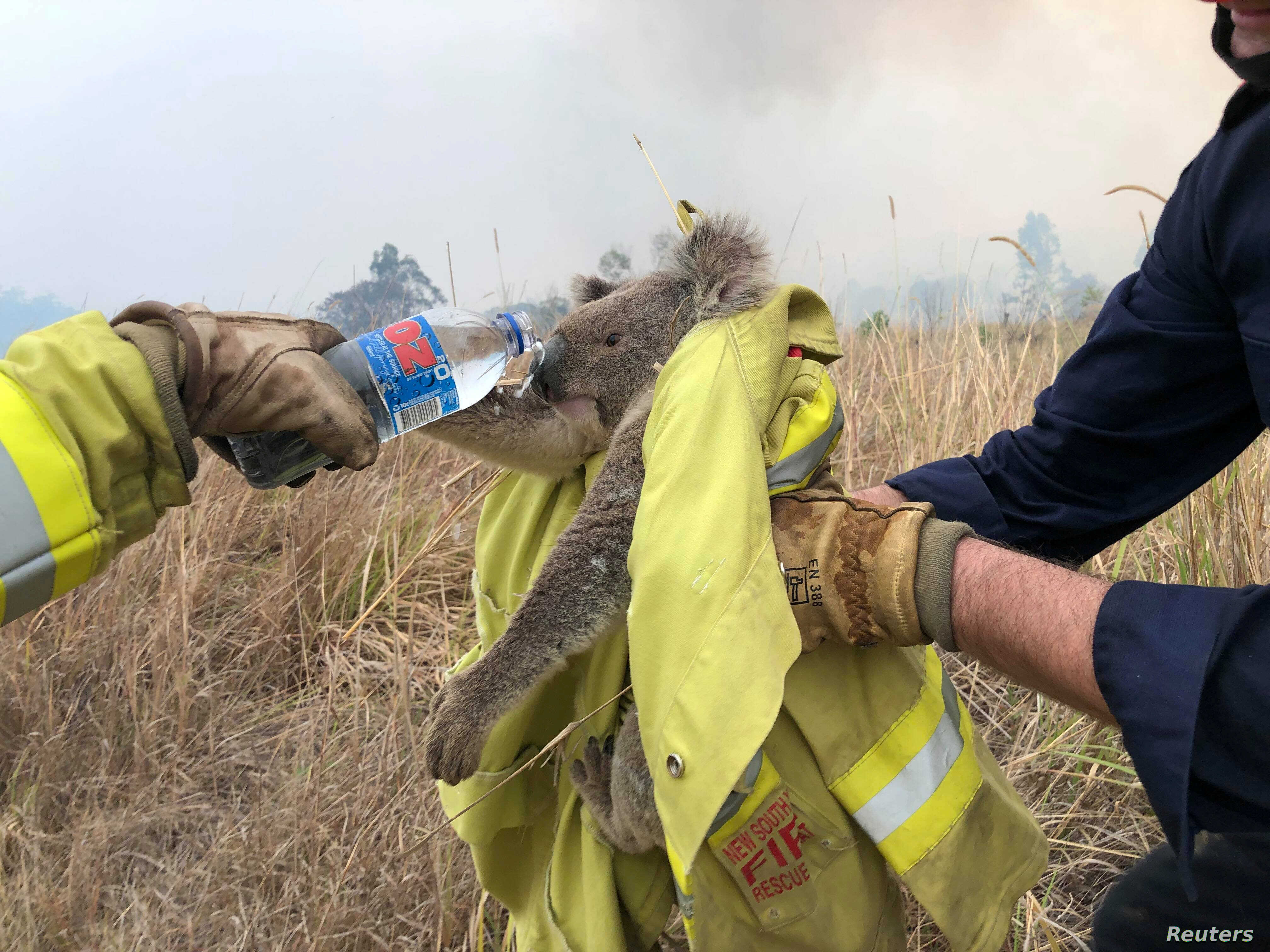 Image result for australia fire pictures wildlife""