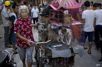 A woman with a load of dogs on her tricycle cart arrives at a market for sale during a dog meat festival in Yulin in south China's Guangxi Zhuang Autonomous Region, June 21, 2016.