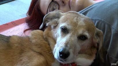 Doga helps create a stronger bond between the pet parent and pup.