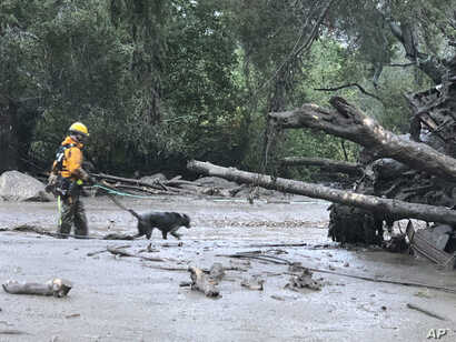 In this photo provided by Santa Barbara County Fire Department, a K-9 search and rescue team walks into an area of debris and mud flow in Montecito. California, Jan. 9, 2018.