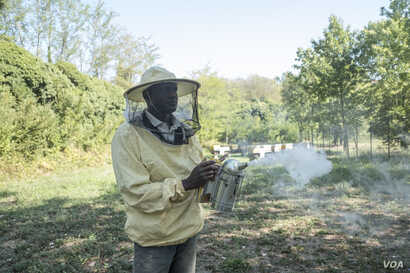 Abdul Adan works with bees in Alessandria, Italy, Aug. 23, 2017. Adan, of Senegal, arrived in Italy in 2015, and started training at Bee My Job, a project to help migrants and refugees in Italy, in late 2016.