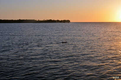 Dolphins cavort in the Gulf waters off the Everglades.