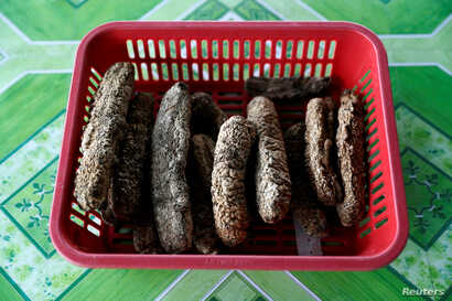 A basket of dried sea cucumbers is seen in Mapan Mapan, Sabah, Malaysia, July 7, 2018.
