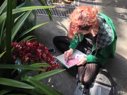 Art student Angela Pagan chose orchids for her nature drawing class, March 8, 2016. (J.Taboh/VOA)
