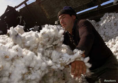 FILE - An Uzbek worker pushes raw cotton at the Chinaz ginnery, 70 km (44 miles) southwest of the capital, Tashkent, Sept. 30, 2003.