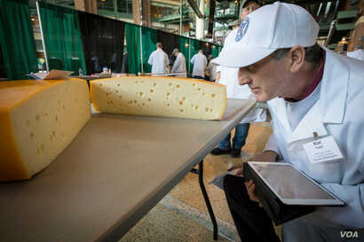"""Judges say Swiss cheeses are difficult to get right, in part because the holes – called the """"eyes"""" – have to be perfectly formed on the inside, seen at the U.S. Cheese Championship in Green Bay, Wis., March 5, 2019."""