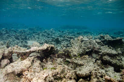 A dead reef in Guam. Marine scientists estimate we've already lost at least a quarter of the world's reefs, with another 30% predicted to die in the next 30 years.