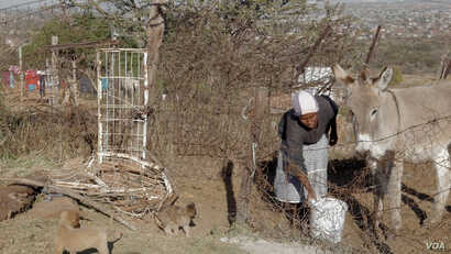 Mpho Mashele's eight donkeys are her most precious possessions - and her family's lifeline. The family uses them to transport goods in this small, rural village north of South Africa's capital, Pretoria. (Courtesy - Zaheer Cassim)