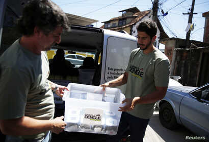 FILE - Technicians carry containers filled with Aedes aegypti mosquitoes with the dengue-blocking Wolbachia bacteria before they are released at the Tubiacanga neighborhood in Rio de Janeiro, Sept. 24, 2014. Similar work has been done in Australia, V...