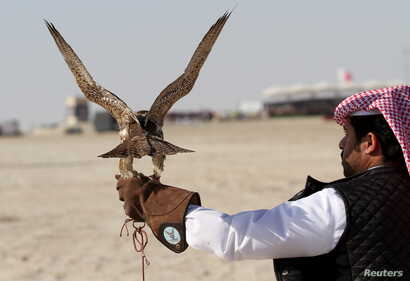 FILE - A Qatari man prepares to release his falcon during the Qatar International Falcons and Hunting Festival at Sealine desert, Qatar, Jan. 29, 2016. The participants at the contest compete to see whose falcon is fastest at attacking its prey.