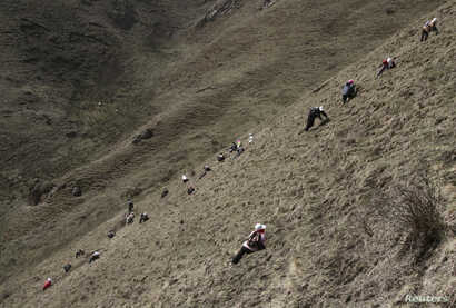 FILE - Local residents search for caterpillar fungus, also known as Cordyceps Sinensis, a traditional Tibetan medicine now popular in China and across the world, Laji mountains of Guide County in Qinghai Province.