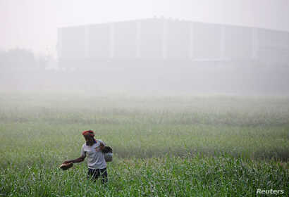 A worker walks through a farm on a smoggy morning in Mumbai, India, Dec. 11, 2017.