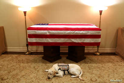 Sully, the service dog of former U.S. President George H.W. Bush in his final months, lays in front of Bush's casket at the George H. Lewis & Sons funeral home in Houston, Texas, U.S., Dec. 3, 2018.
