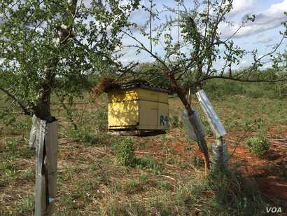 One of the hives that make up a beehive fence at Charity Mwangome's farm in Taita-Taveta area of Kenya, April 19, 2016.