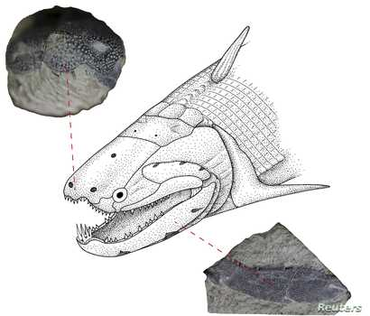An undated illustration shows the Early Devonian bony fish called Psarolepis romeri found in south China.
