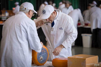 Judges smell a sample of one of the 2,555 cheeses entered in the U.S. Championship Cheese Contest, in Green Bay, Wis., March 5, 2019. Smell is just one criterion in the technical competition of the contest that began in 1981.