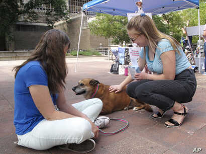 University of Wisconsin junior Grace Austin, right, visits with Maggie, a therapy dog, while Maggie's handler Beth Junge looks on at a NextGen America event to register voters in Madison, Wisconsin, Aug. 30, 2018.