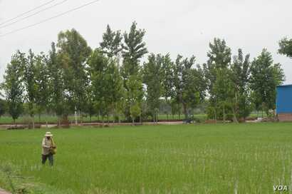Bumper harvests after good rains did not bring good news for farmers as the crop glut led to a price crash.