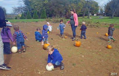 Pumpkin picking is a chance to learn about colors, shapes and numbers.
