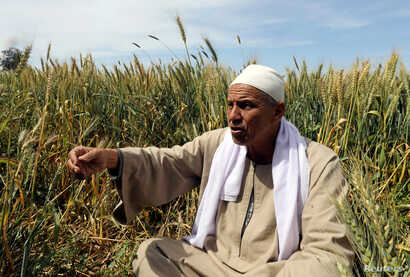 Farmer Mohamed Abdelkhaleq speaks during an interview with Reuters in a field in the Beheira Governorate, north of Cairo, Egypt, April 4, 2018.