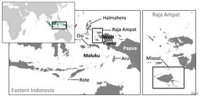 The world's largest shark fin industry lies in the heart of the Coral Triangle (Courtesy of Vanessa Jaiteh).