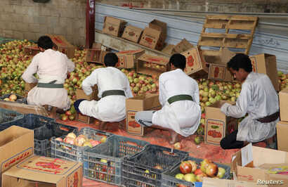 FILE - Workers pack pomegranates for export in Saada, Yemen, Sept. 25, 2018.