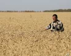 Drought in the Black Sea region cut Russia's wheat harvest 